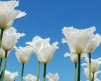 В Казани появился новый сквер «Белые цветы»