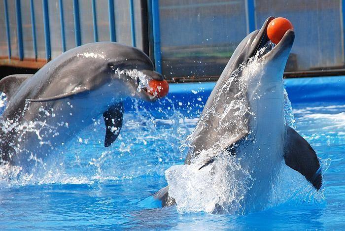 скачиваний дельфинарий в иркутске на комсомоле правовой центр осуществляет