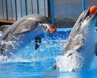 Дельфины продлят гастроли в Самаре до конца января 2015 года