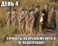 Казанские сурикаты переехали