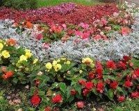 В конце декабря в Самаре начнется посев семян на рассаду для цветочного оформления города в 2015 году