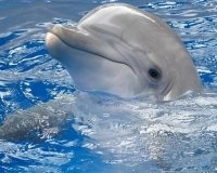 Дельфинарий пробудет в Самаре до февраля