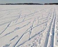 «Лыжня России» в этом году перенесена из Нижнего Тагила в Екатеринбург