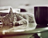 Котокафе «Кошкин дом» расселяет своих жителей