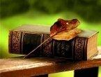 Поэтический полдень «Созвучие души»