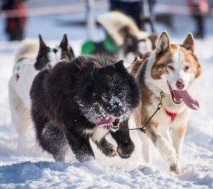 В феврале в Автограде пройдет фестиваль ездового спорта