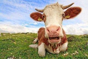 Видео дня: американский фермер собрал стадо коров в улыбающийся смайлик