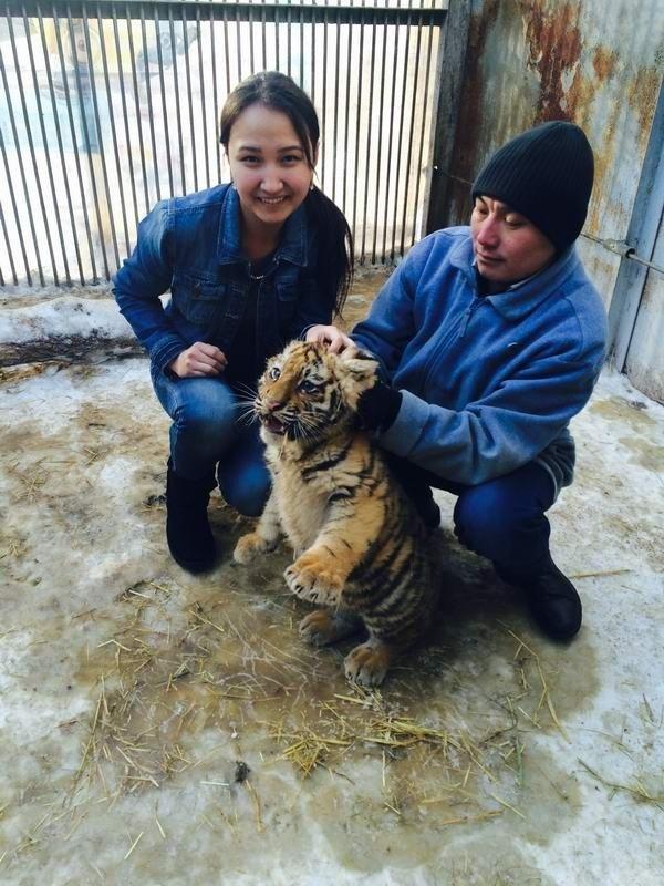 В Карагандинском зоопарке родились амурские тигры.