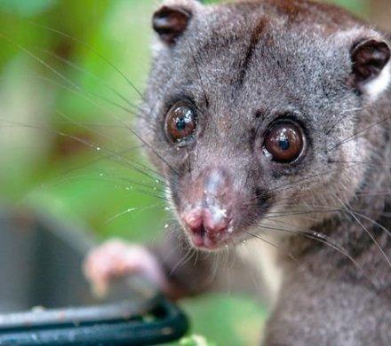 Пять самых классных животных Челябинского зоопарка, которых можно взять под опеку