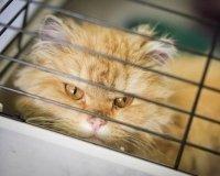 В галерее «Свитер» пройдет первый общественный форум по защите животных
