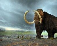 В российском центре изучения ДНК ископаемых животных попробуют клонировать мамонта