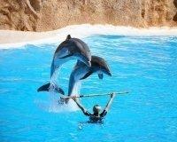 С 5 апреля у ТРК «Горки» снова откроется дельфинарий