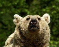 Медведица Бусинка предсказала Челябинску теплое лето