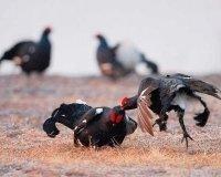 15 апреля в Челябинской области открывается сезон охоты