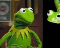 У Лягушонка Кермита появился реальный двойник