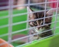 В воскресенье в городе пройдет выставка-ярмарка кошек и котят