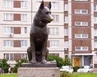 Завтра в Тольятти выйдет фильм о псе-памятнике «Костя»