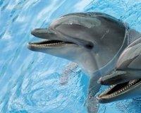 В Караганду едет дельфинарий