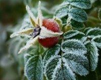 В Челябинской области обещают заморозки