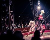 Для горожан в Столичном цирке приготовили завораживающие представления!