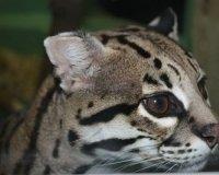 В зоопарке выберут самую красивую кошечку