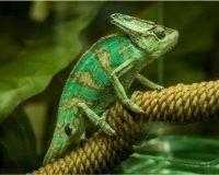 В Циферблате откроется «Удивительный зоопарк»