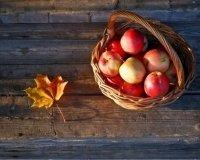 Жителей Казани приглашают на яблочный фестиваль