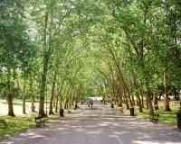 Зеленая зона «Сад дружбы Казахстан - Корея» скоро появится в Астане