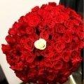Букет из 51 или 101 розы!