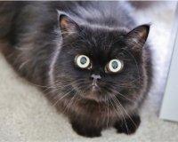 В «Южном» состоится выставка кошек