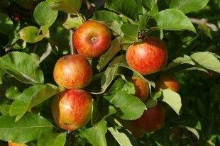 Apple решила запатентовать название «Яблоко»
