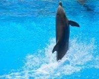 25 ноября в Красноярске начнет работу  дельфинарий