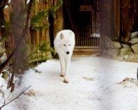 В екатеринбургском зоопарке появился Туман