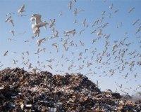 В Челябинской области создадут шесть новых полигонов для мусора