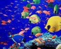 В Тюмени открылась секция «Аквариумного рыбоводства»