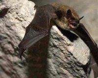 Завтра в «Самарской луке» откроется «Музей летучей мыши»