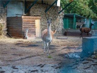 Казанцев приглашают в зоопарк на День матери